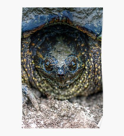 Snapping Turtle I Poster