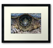 Snapping Turtle II Framed Print