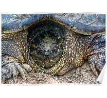 Snapping Turtle III Poster