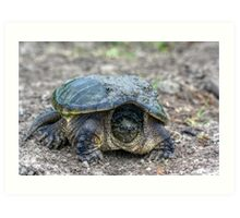 Snapping Turtle V Art Print