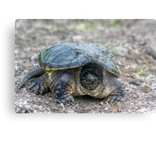 Snapping Turtle V Metal Print