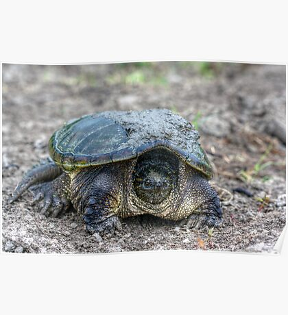 Snapping Turtle V Poster