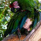 Green Parrot by mrfriendly