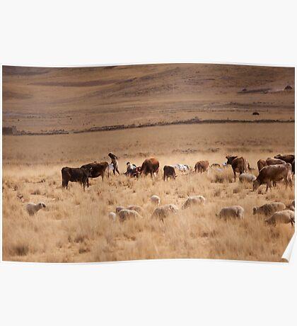 Farmer Altiplano Poster