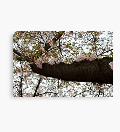 Cherry Summer Canvas Print