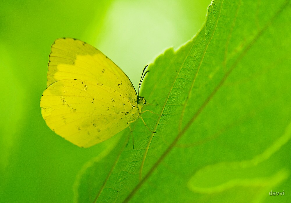 yellow and green by davvi