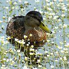 Flower Duck by Jo Nijenhuis
