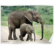 SIDE BY SIDE - THE AFRICAN ELEPHANT – Loxodonta Africana - Afrika Olifant Poster