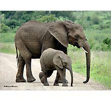 SIDE BY SIDE - THE AFRICAN ELEPHANT – Loxodonta Africana - Afrika Olifant Photographic Print