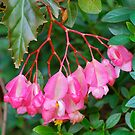 Begonia Bunch by Penny Smith