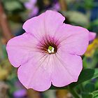 Pink Petunia by peasticks
