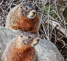 Mount Marmot by Owed to Nature