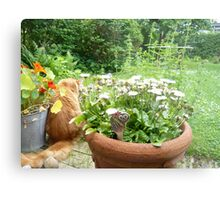 Maine Coon discovering herbs Metal Print