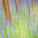 Bluebell Wood, Norfolk by DaveTurner