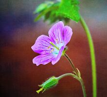 Cranesbill Catching the Light by Anita Pollak