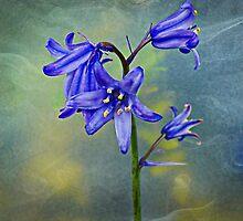 A stem of Bluebells by Forfarlass