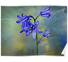 A stem of Bluebells Poster