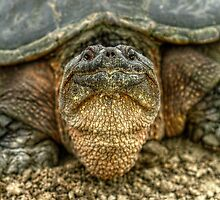 Snapping Turtle IX by EelhsaM