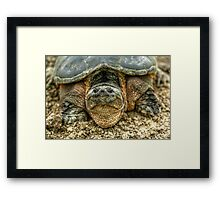 Snapping Turtle VI Framed Print