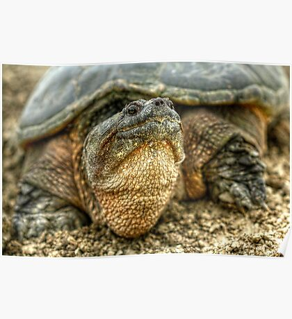 Snapping Turtle VII Poster
