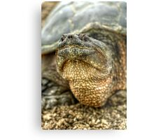 Snapping Turtle X Metal Print