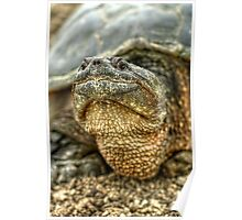 Snapping Turtle X Poster