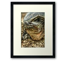 Snapping Turtle XI Framed Print