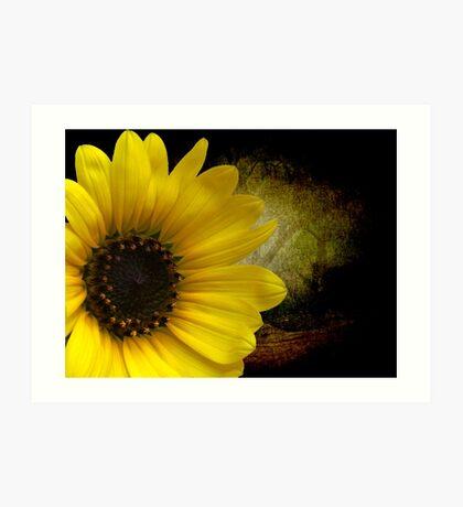 Texas Common Sunflower Art Print