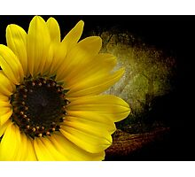 Texas Common Sunflower Photographic Print