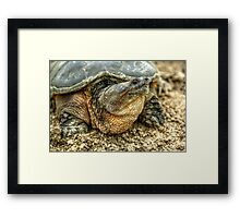 Snapping Turtle VIII Framed Print