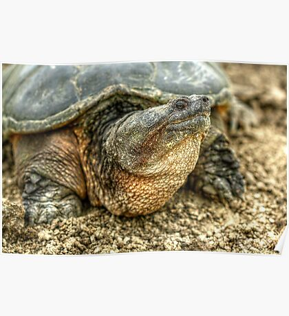 Snapping Turtle VIII Poster