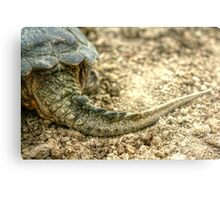 Snapping Turtle XII Metal Print