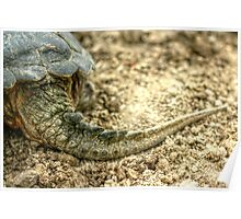 Snapping Turtle XII Poster