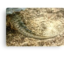 Snapping Turtle XIII Metal Print