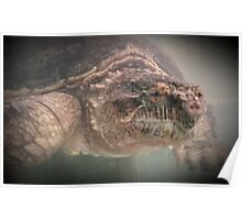 Wildlife: Snapping Turtle Poster
