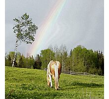 Palomino Paint Horse and Rainbow Artwork Photographic Print