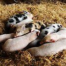 Piglets by melek0197