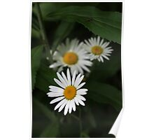 Wetland Daisies Poster