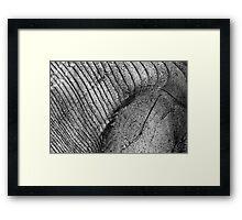 Wood Eye 2 Black and White Framed Print