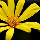 Yellow Flower by Sunshinesmile83