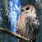 A Florida Barred Owl by jozi1