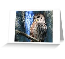 A Florida Barred Owl Greeting Card