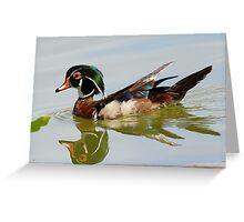 Reflections of a wood duck ! Greeting Card