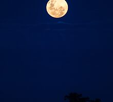 super moon  by outbacksnaps