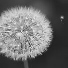 Dandelion Macro Flight by modernistdesign