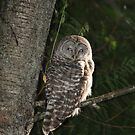 Barred Owl Forest Hike by hummingbirds