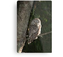 Barred Owl Forest Hike Metal Print