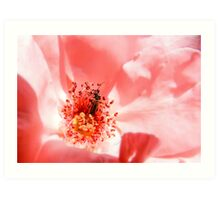 red rose with insect- rosa con insecto Art Print