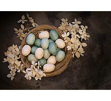 Spring Primative Nest Photographic Print