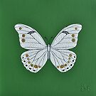 White morpho butterfly  by Trudi Hipworth